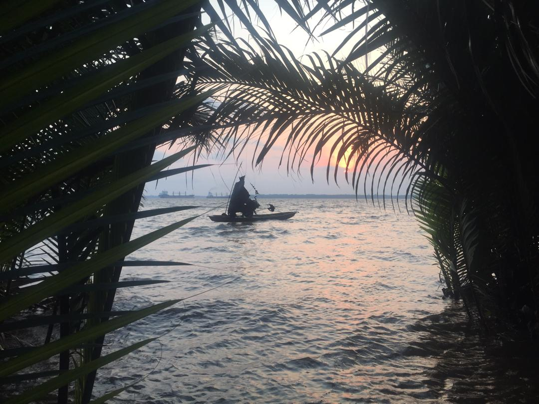 Les Mangroves